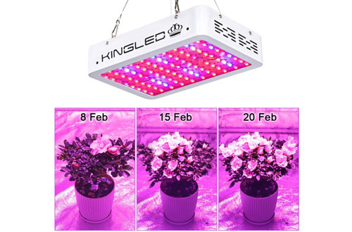 King Plus 1000wDouble Chips Full SpectrumLED Grow Light with UV & IR